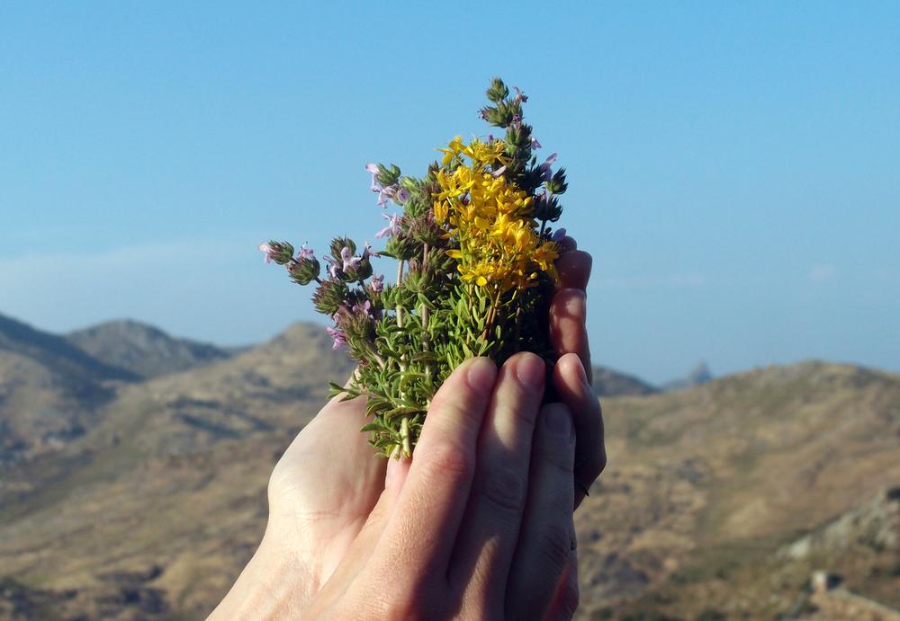 5 herbes médicinales qui font mieux contre le Covid-19 que les médicaments