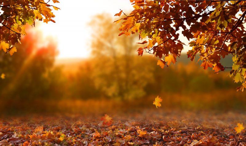 Equinoxe d'automne : ce qu'il signifie pour notre santé